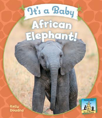 It's a Baby African Elephant!