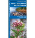 Great Lakes Trees & Wildflowers: A Folding Pocket Guide to Familiar Species