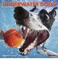 Underwater Dogs 18-Month Mini Calendar