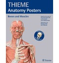 Thieme Anatomy Posters Bones and Muscles