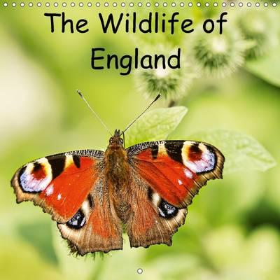 The Wildlife of England 2016 : Photos of Birds and Insects from Around England.
