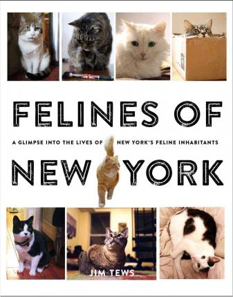 Felines of New York : A Glimpse Into the Lives of New York's Feline Inhabitants