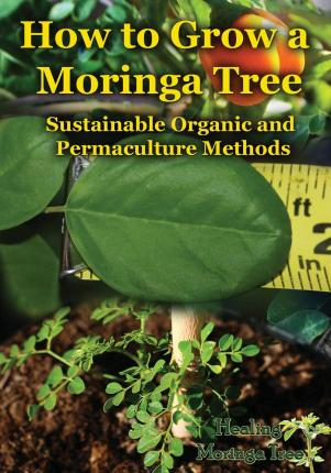 How to Grow a Moringa Tree : Sustainable Organic and Permaculture Methods