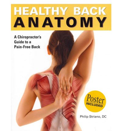 Healthy Back Anatomy: A Chiropractor's Guide to a Pain-Free Back