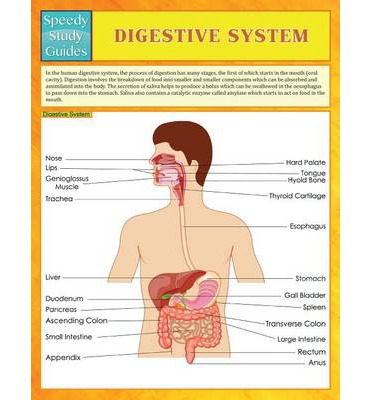 a study of the digestive systems The human digestive system consists of the gastrointestinal tract plus the  accessory organs of digestion in this system, the process of digestion has many  stages,.