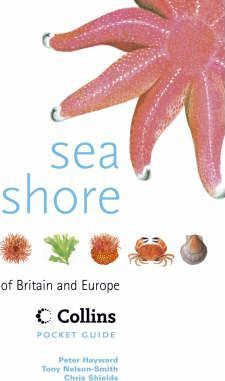 Sea Shore of Britain and Europe
