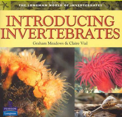 Introducing Invertebrates
