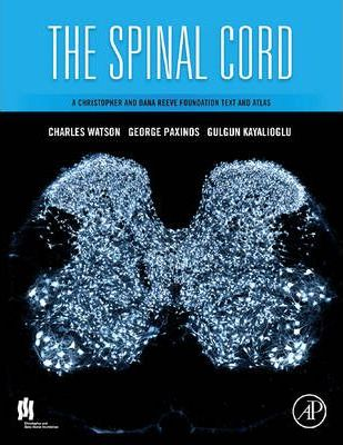 The Spinal Cord