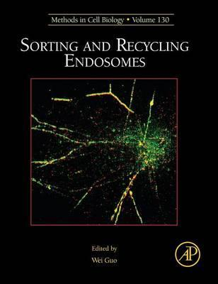 Sorting and Recycling Endosomes: Volume 130