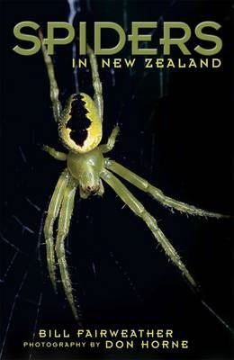 Spiders in New Zealand