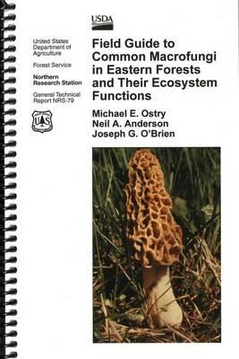 Field Guide to Common Macrofungi in Eastern Forests and Their Ecosystem Functions