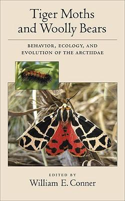 Tiger Moths and Woolly Bears