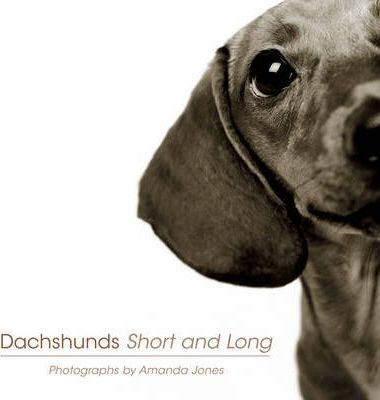 Dachshunds Short And Long