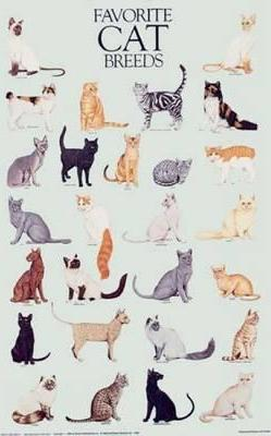 Favorite Cats