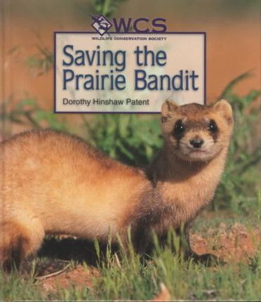 Saving the Prairie Bandit