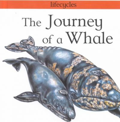 The Journey of a Whale