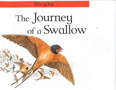 The Journey of a Swallow