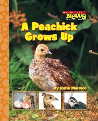 A Peachick Grows Up
