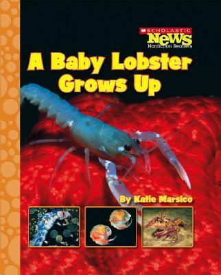 A Baby Lobster Grows Up