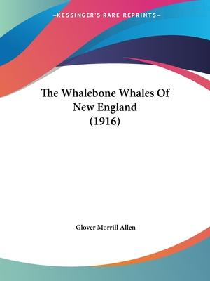 The Whalebone Whales of New England (1916)