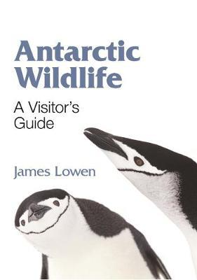 Antarctic Wildlife