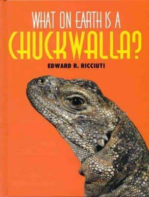 What on Earth is a Chuckwalla?