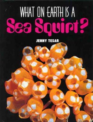 What on Earth is a Sea Squirt?