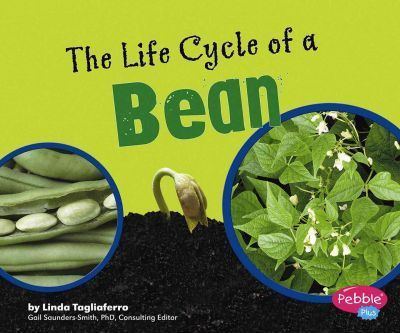The Life Cycle of a Bean
