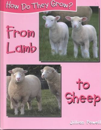 From Lamb to Sheep
