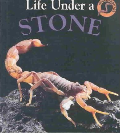 Life Under a Stone