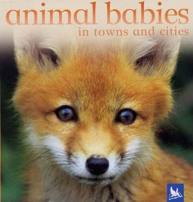 Animal Babies in Towns and Cities