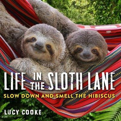 Life In The Sloth Lane : Slow Down and Smell the Hibiscus