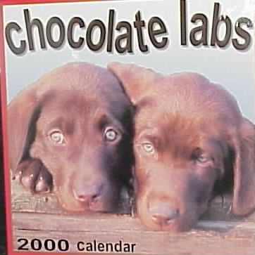 Chocolate Labs 2000 Calendar