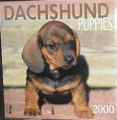 Dachshund Puppies 2000