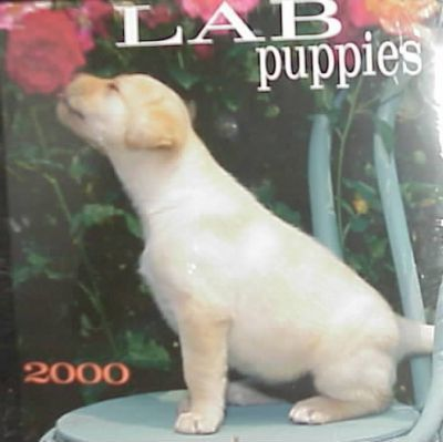 Lab Puppies 2000