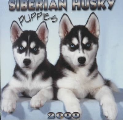 Siberian Husky Puppies 2000