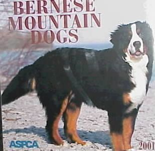 Bernese Mountain Dogs 2001 Calendar