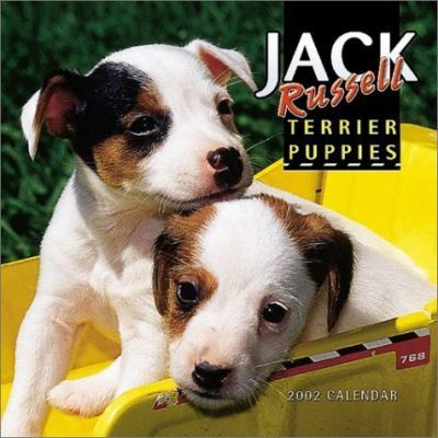 Jack Russell Terrier Puppies: 2002