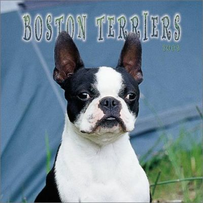 Boston Terriers: 2002
