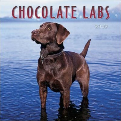 Chocolate Labrador Retrievers: 2002
