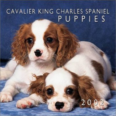 Cavalier King Charles Spaniel Puppies: 2002