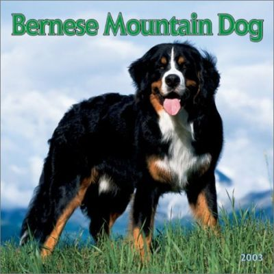 Bernese Mountain Dogs: 2003