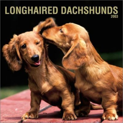 Longhaired Dachshunds: 2003