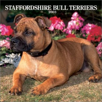 Staffordshire Bull Terriers: 2003