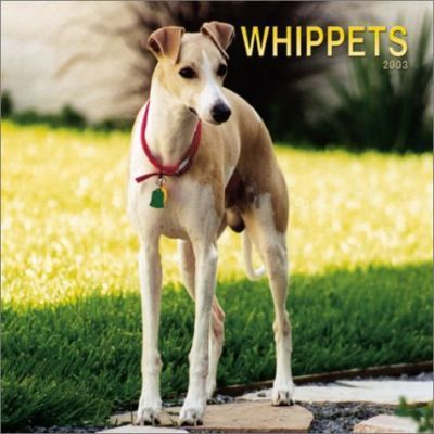 Whippets: 2003