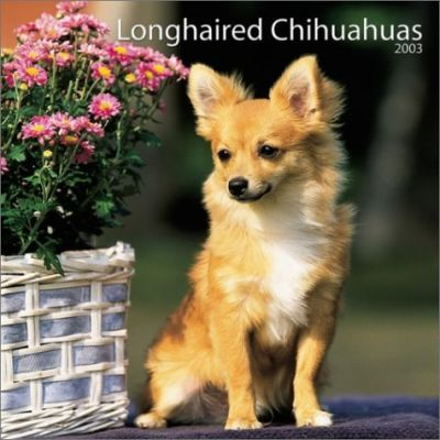 Longhaired Chihuahuas: 2003