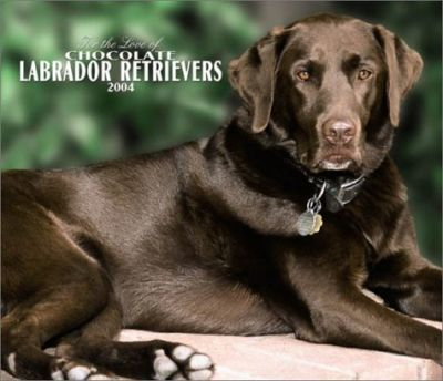 For the Love of Chocolate Labrador Retrievers Deluxe Wall Calendar: 2004