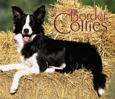 Border Collies, for the Love of Deluxe Wall