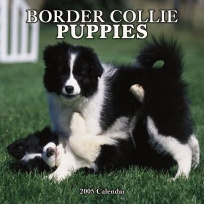 Border Collie Puppies Wall