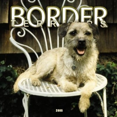 Border Terriers Wall